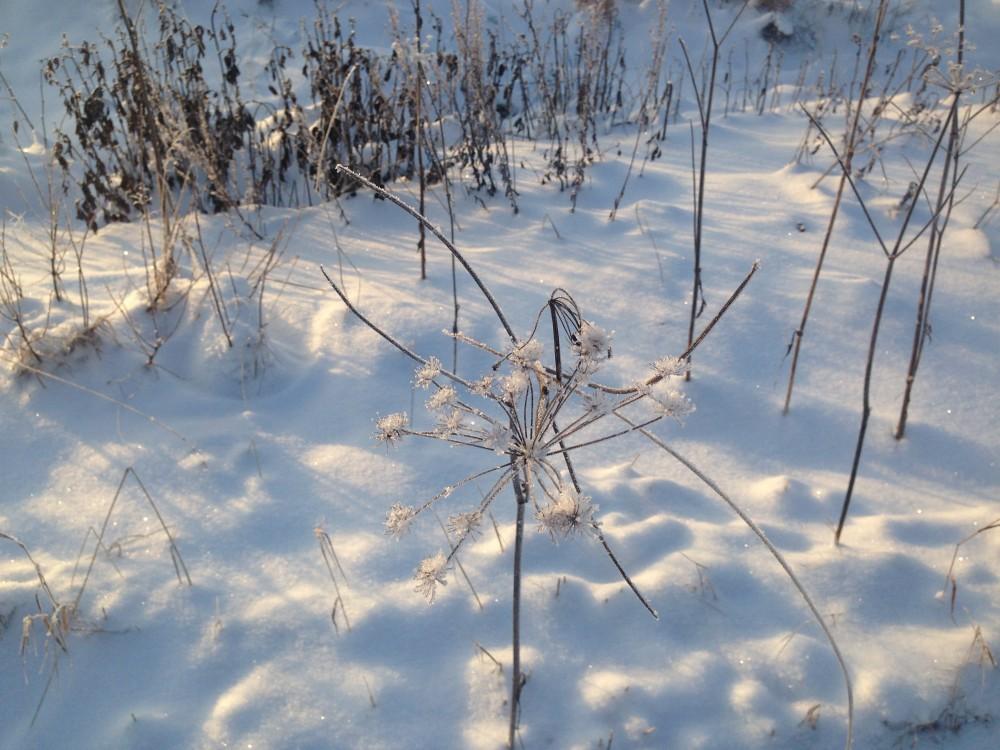 Arteles Snow 2016